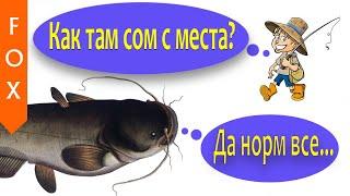 Сом с места Ахтуба Русская Рыбалка 4