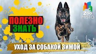 Полезно знать с ZooMISTO | Уход за собакой зимой