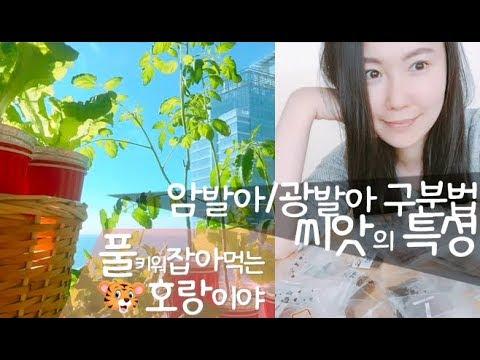 작물재배기초♥파종상식♥씨앗특성♥암발아