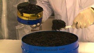 Krisenfester Luxus: Nachfrage nach Kaviar wächst