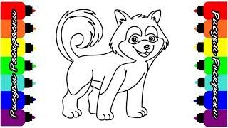 Собака Хаски Раскраска Как Рисовать Хаски Рисуем Раскраски Для Малышей
