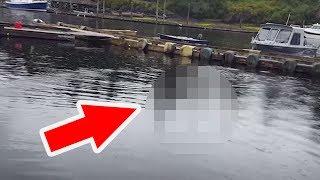 Der Fischer filmt das Wasser, und traut seinen Augen nicht! thumbnail