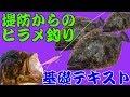 【ヒラメ釣り】堤防からの仕掛け・釣り方 【基礎テキスト編】