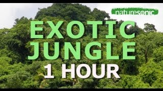 EXOTIC DEEP JUNGLE SOUND AMBIENCE FOR RELAXATION & MEDITATION, MEXICO