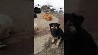 Встретил на улице близнецов бездомных собак Короткое видео