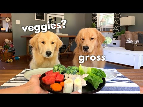 Pet Corner - Dog Reviews Food With Girlfriend