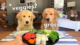 Dog Reviews Food With Girlfriend   Tucker Taste Test 12