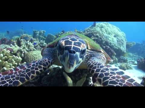 PADI Keep Diving...