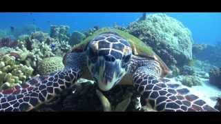 PADI Keep Diving