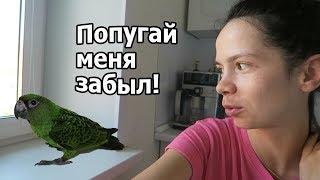 VLOG: Мы дома / Попугай меня не признает ((( / Мы пираты