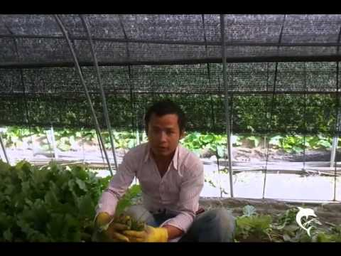 agriculture green house hard job in south korea