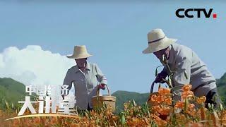 《中国经济大讲堂》 20200412 谁来照护农村老人的晚年生活?| CCTV财经
