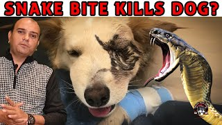 How to save your Dog from Deadly Snake Bite? Puppy n Dogs vs Snake Venom | Baadal Bhandaari #DogCare