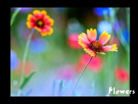 Картинки с Днем Рождения Цветы