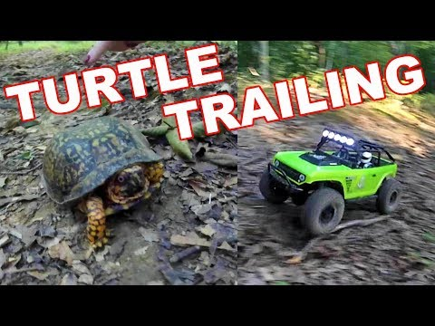 Turtle Trailing with Our Axial SCX10s RC Crawlers - TheRcSaylors