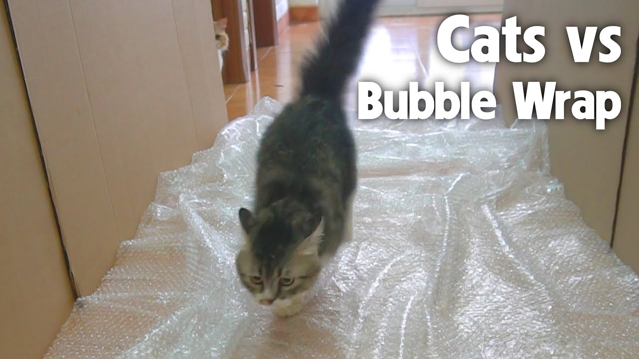 Cats Reaction When First Seeing Bubble Wrap