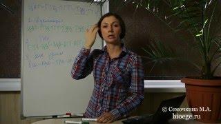 Задачи по цитологии: Задачи на мутации в цепи