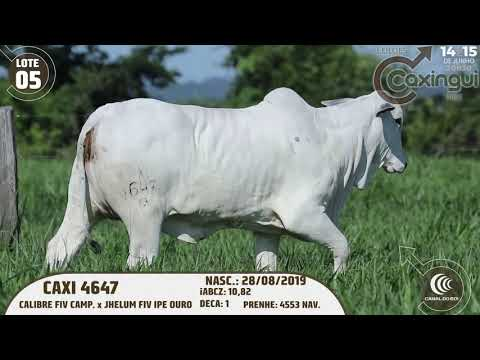 LOTE 05   CAXI 4647
