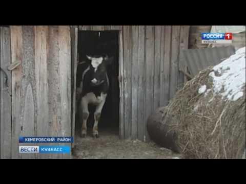 В Кемеровском районе откроются аптека и английская школа