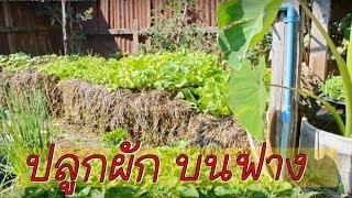 ปลูกผักไร้ดิน:วิธีปลูกผักบนก้อนฟาง
