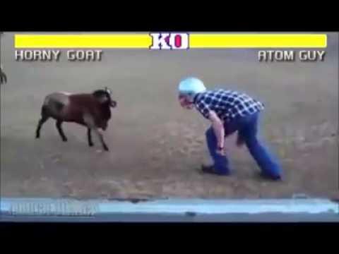 Ultimate fight [Ovnovi vs Ljudi]