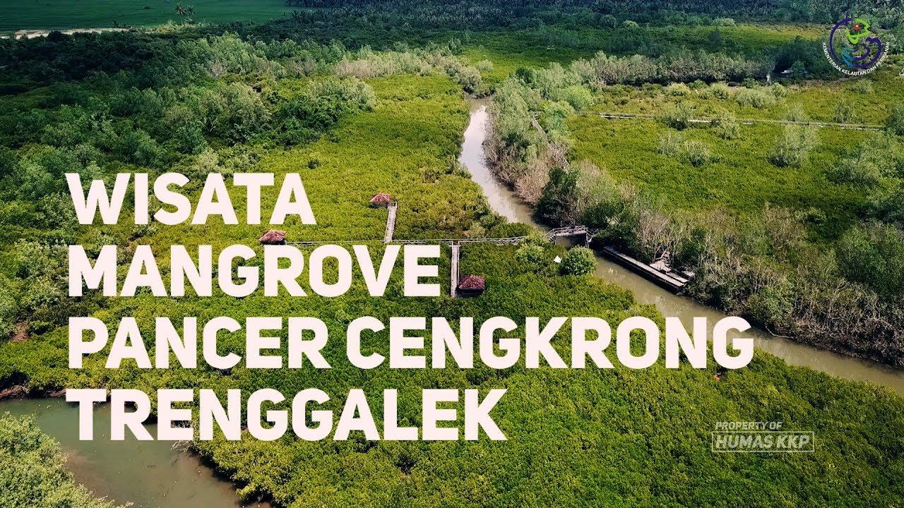 Vlog Wisata Mangrove Pancer Cengkrong Trenggalek Youtube