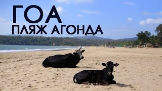 Агонда Гоа. Пляж Агонда