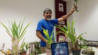 Reunión Mensual Septiembre I Reposo De Catasetum Lycate Y Otras Plantas