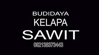 Kelapa Sawit 082138373443 Budidaya Kelapa Sawit, Perkebunan Kelapa Sawit, Perusahaan Kelapa Sawit