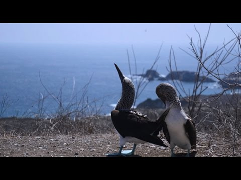 The Other Galapagos: Isla de la Plata