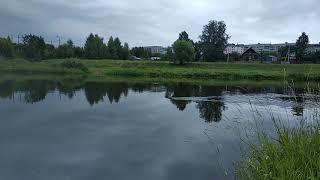 Жесть Не большого крокодила сняли на камеру в реке