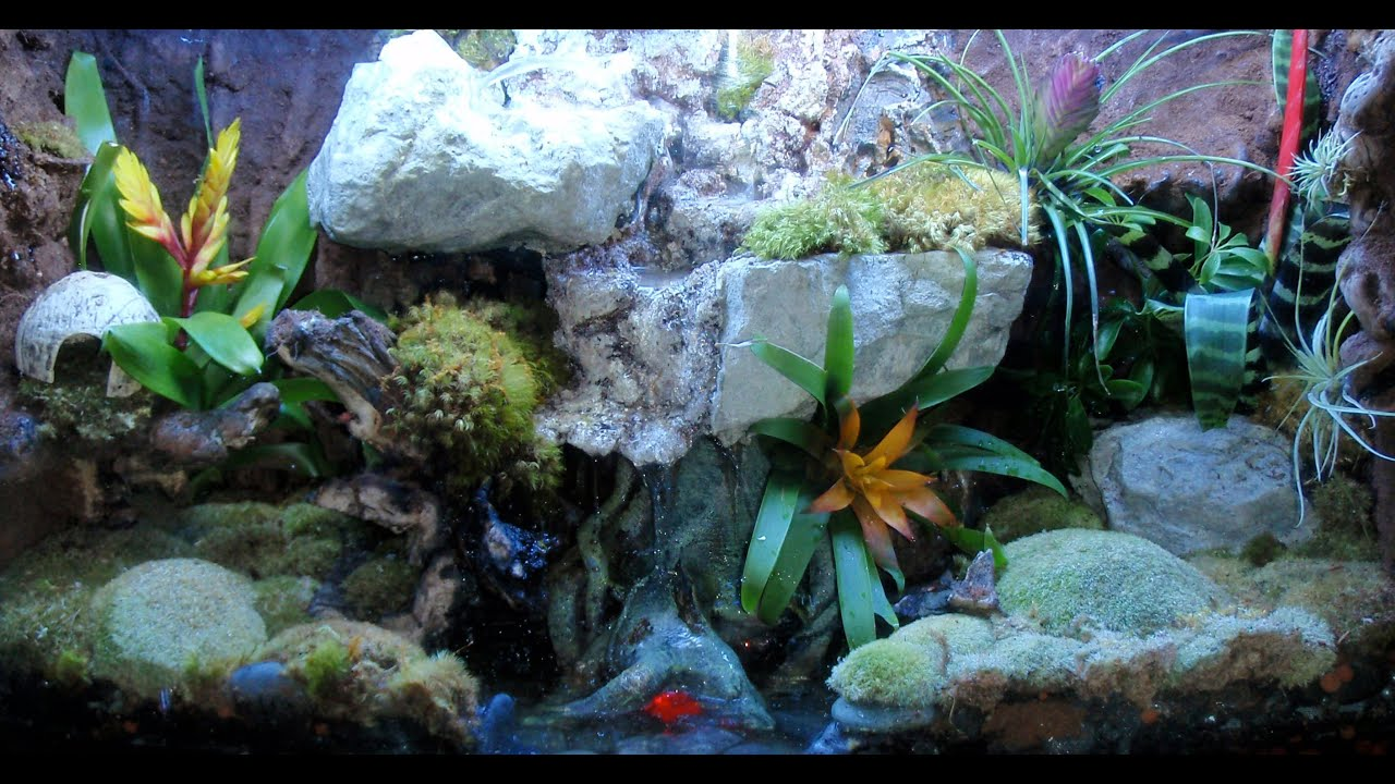 Dart Frog Vivarium Construction Walkthrough - YouTube 10 Gallon Dart Frog Vivarium
