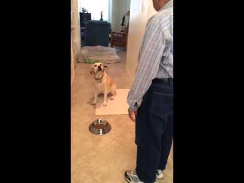 Awesome dog does Vadani Kaval Gheta