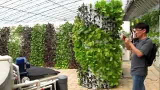 AAAP Aquaponics Community Farming 2