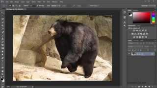 Уроки Фотошопа для начинающих бесплатно с нуля. Как работать в Фотошопе. #8