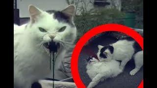 ZOMBIE CAT ! (True Story)
