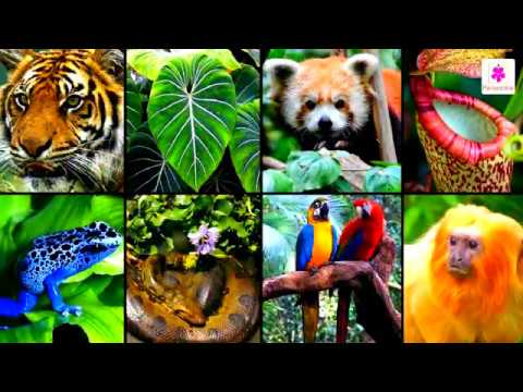amazing adaptations in plants and animals science for kids grade