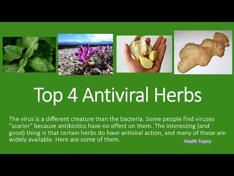Top 4 Antiviral Herbs Youtube