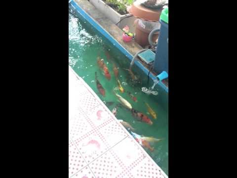 บ่อปลาคราฟทำเองเพิ่มอ๊อกซิเจน