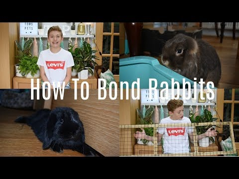 How To Bond Rabbits | Quick And Easy