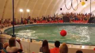 Шоу дельфинов и белой касатки