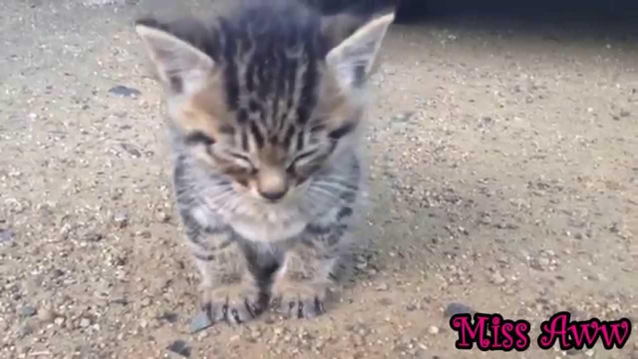 cute kitten suddenly falls asleep youtube