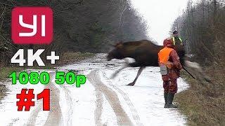 YI 4K+. #1. Загонная охота на лося, кабана и косулю. 15 декабря 2018г.