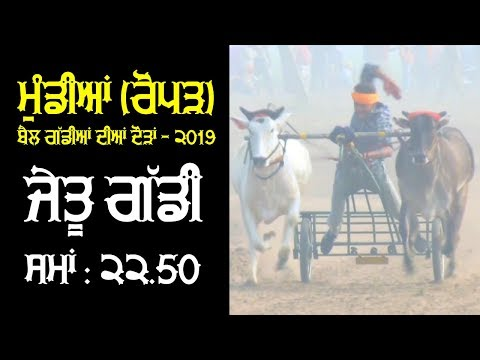 WINNER OXs PAIR | Time : 22.50 / 1100 Feet Distance | at MUNDIAN (Roper) OX RACES - 2019 | MALWA TV