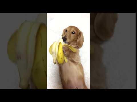 Девушка ест банан -