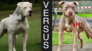 DOGUVERSES: AMERICAN BULL DOG vs. AMERICAN PITBULL TERRIER