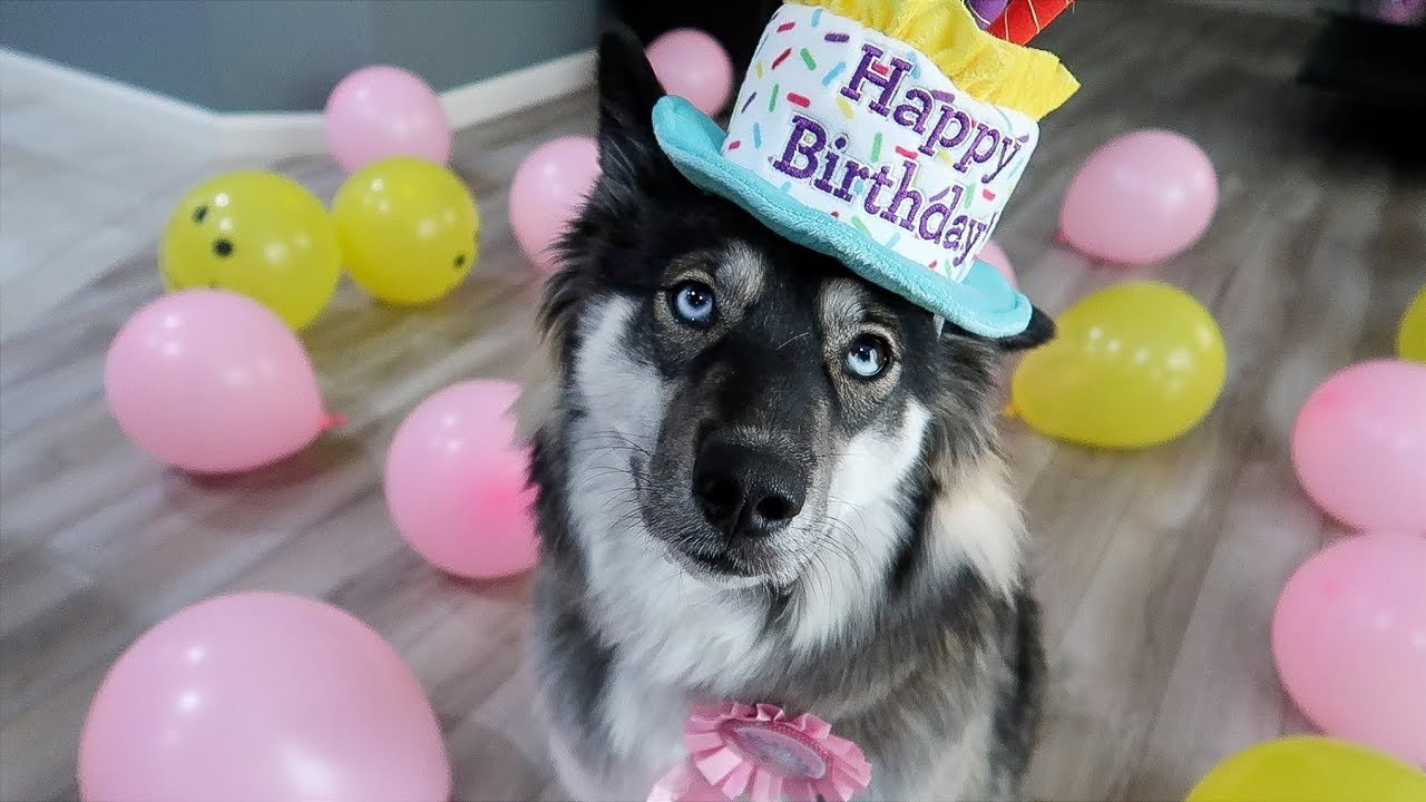 Kakoas Surprise 1st Birthday Party