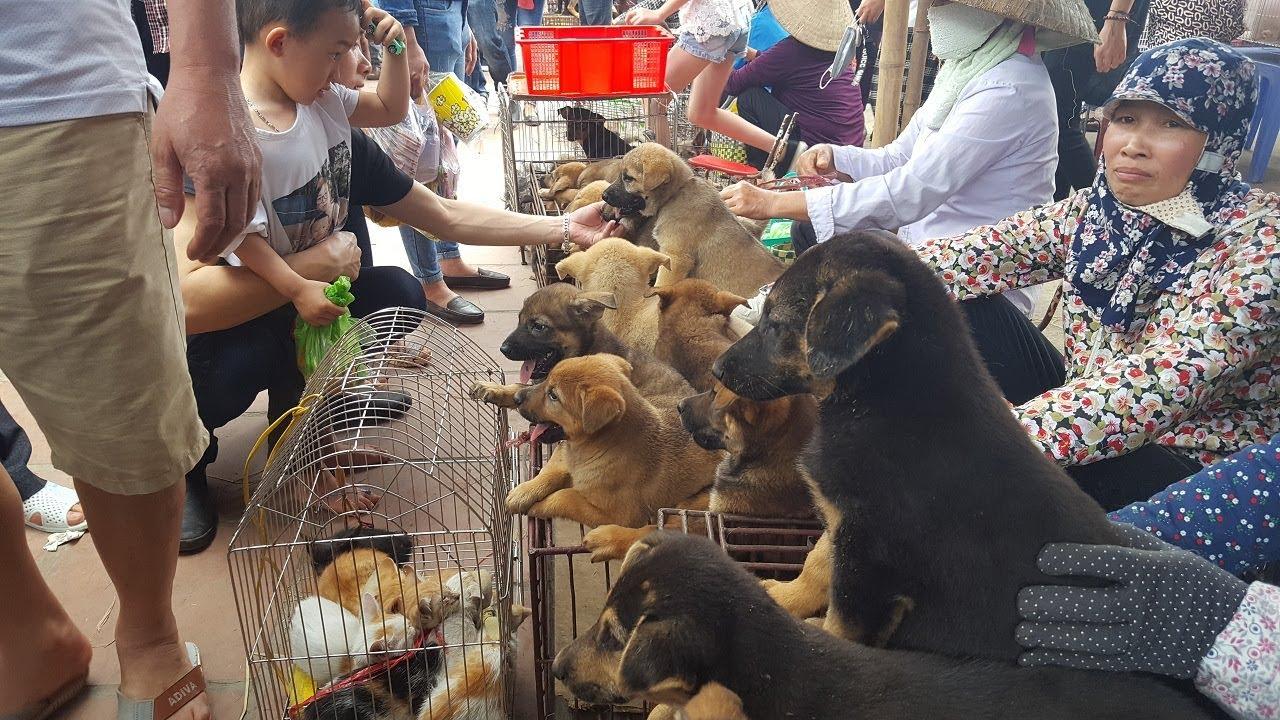 Khám phá chợ bán chó mèo cảnh rẻ và đẹp nhất Việt Nam