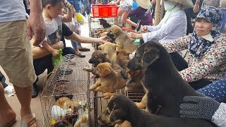 Explore the cheapest and nicest pet market in Vietnam