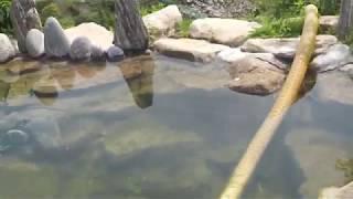 저희 농장에 있는 계곡물 끌어다 만든 연못!!미꾸라지 …